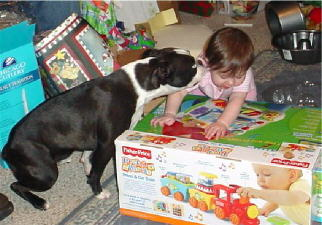 Andre the Boston Terrier kisses Olivia while she opens presents.